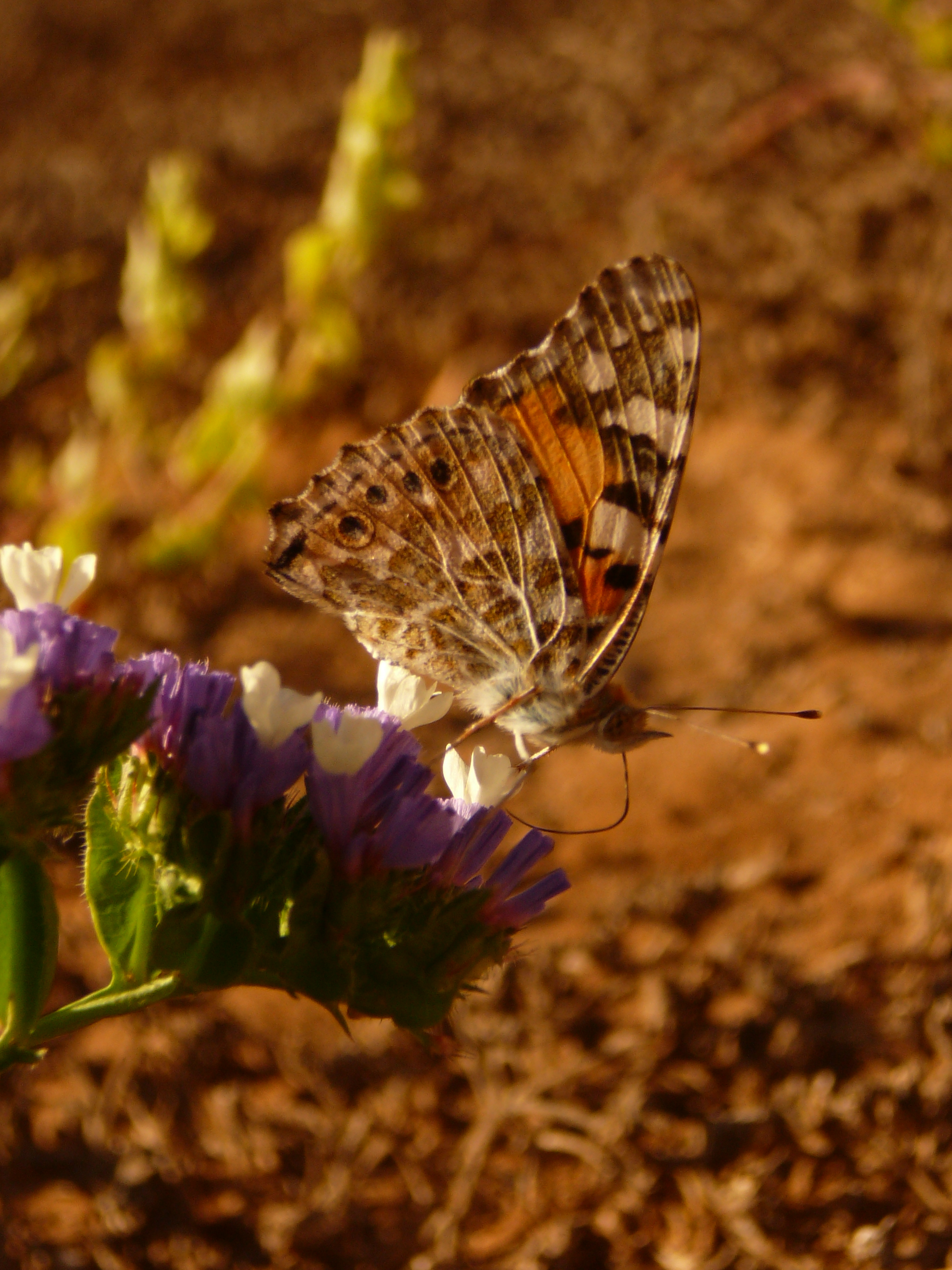 Tag 9 : Plage Aglou - El Aaiún - Flora und Fauna