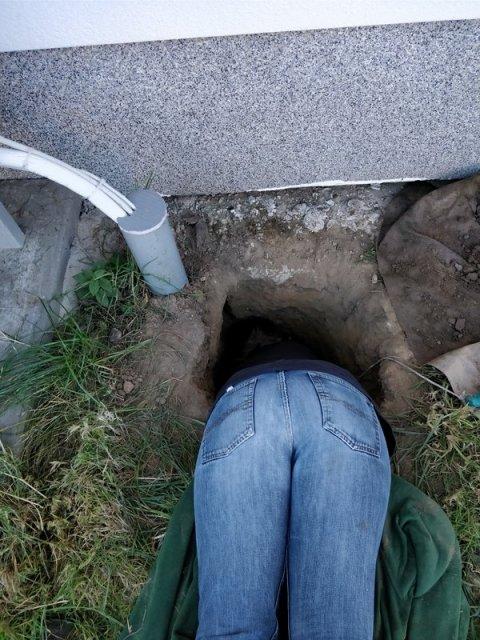 Häschen in der Grube