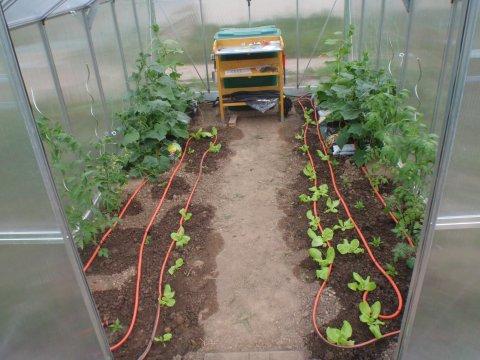 Gewächshaus mit Gartenschläuchen